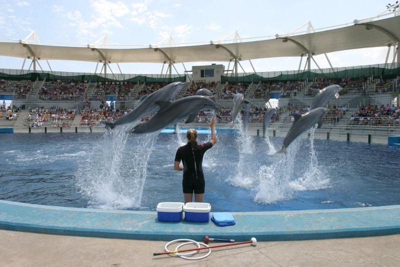Oceanografic Valencia Dolphin Show