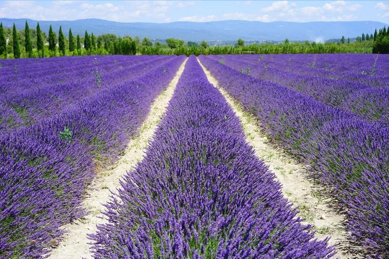 Grasse - Viagens de Um Dia de Nice