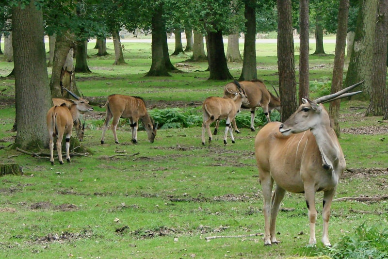Thoiry zoo day trips from Paris