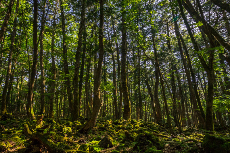 Aokigahara day trips from Tokyo