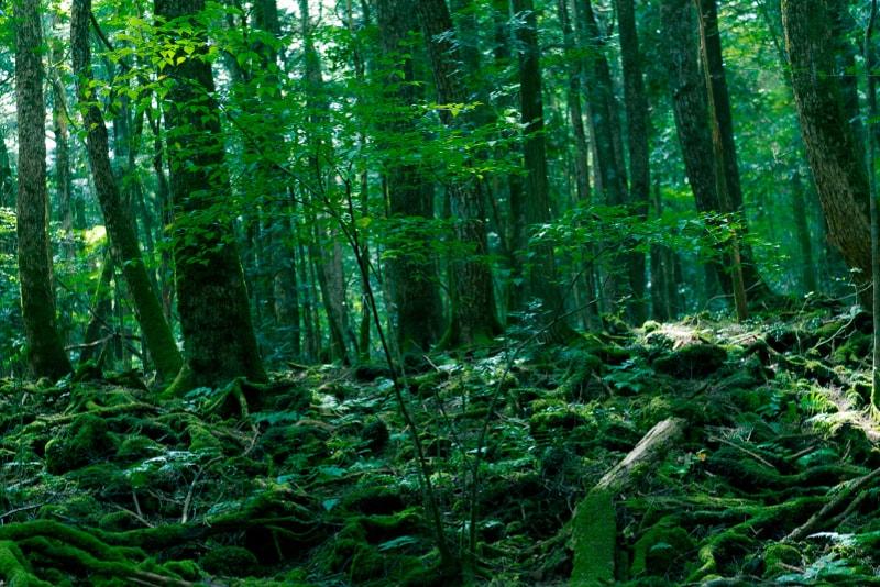 Bosque de Aokigahara