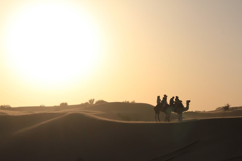 Safari de camellos en el desierto de Dubai