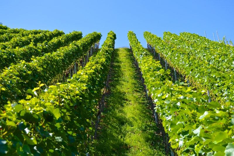 Lucca - tour degustazione vini Toscana