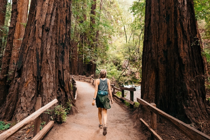 Excursiones de senderismo Muir Woods