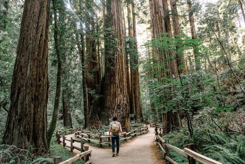 Muir Woods hikking trails