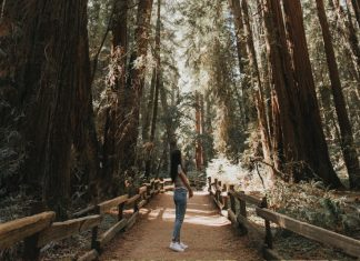 Muir Woods tours