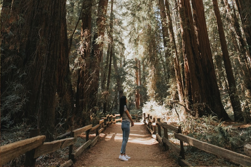 Muir Woods Tours Everything You Need To Know Tourscanner