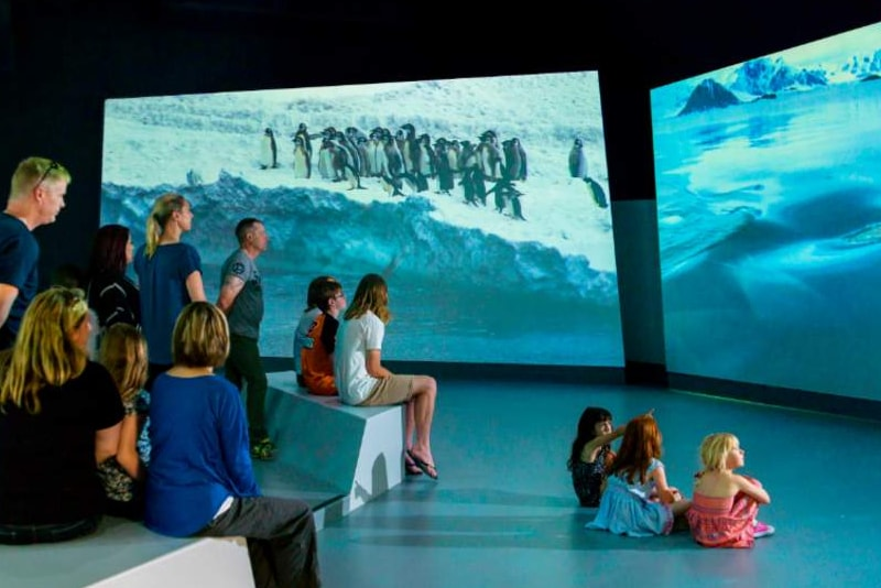 Nobbies antarctic centre