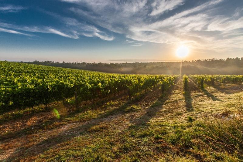 Pisa - Tuscany wine tours