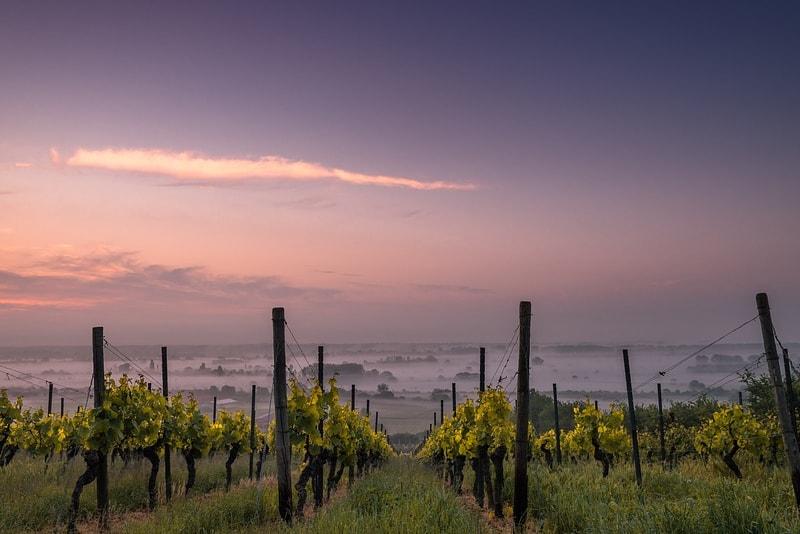 San Francisco Wine Tours