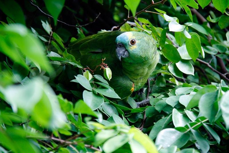 Tijuca rainforest wildlife