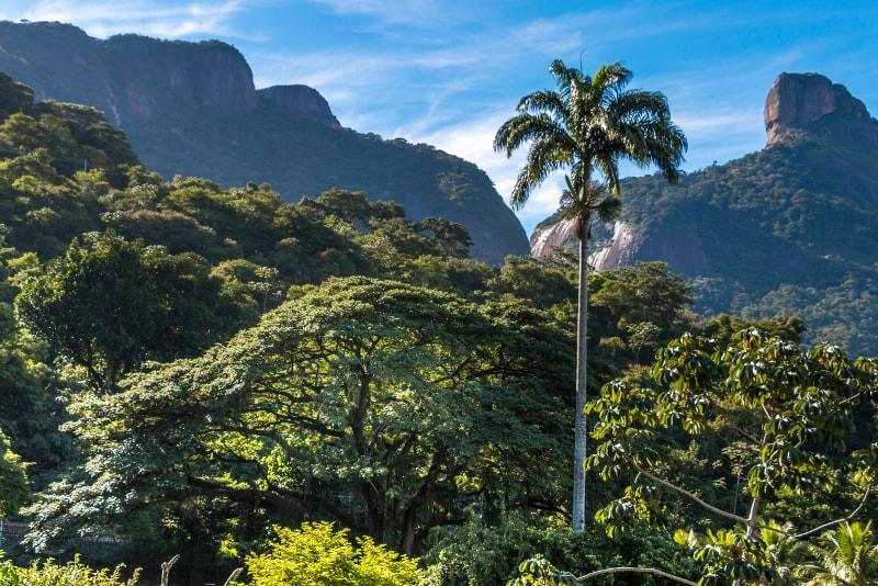 Tijuca rainforest