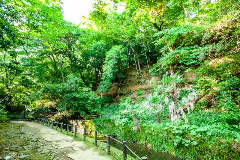 Todoroki escursioni da Tokyo