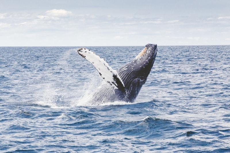 excursion de avistamiento de ballenas