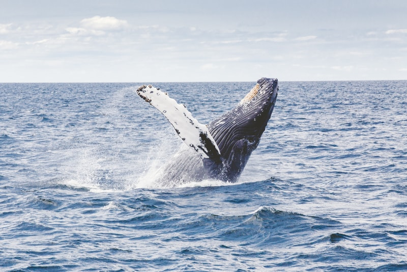 Whale Watching Tours in Philip Island