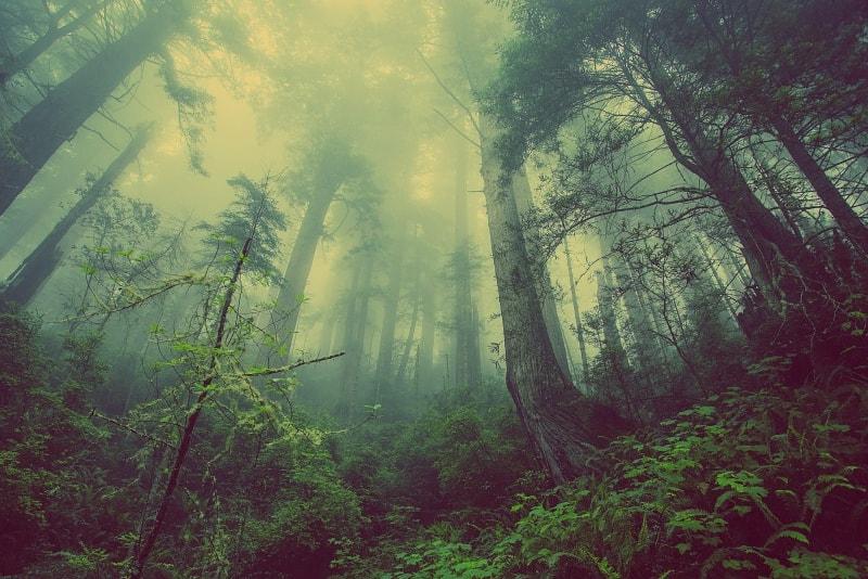 Floresta Aokigahara