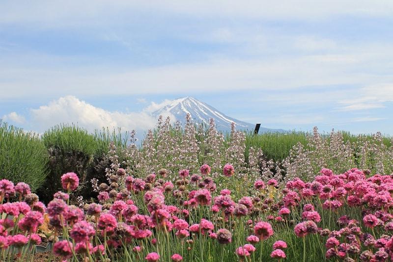 Parque Nacional de Hakone