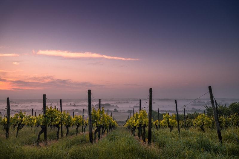 Vineyeards at sunset near Rome