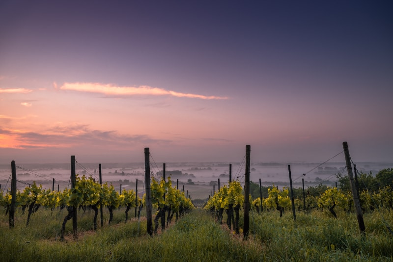 Vineyeards bei Sonnenuntergang in der Nähe von Rom