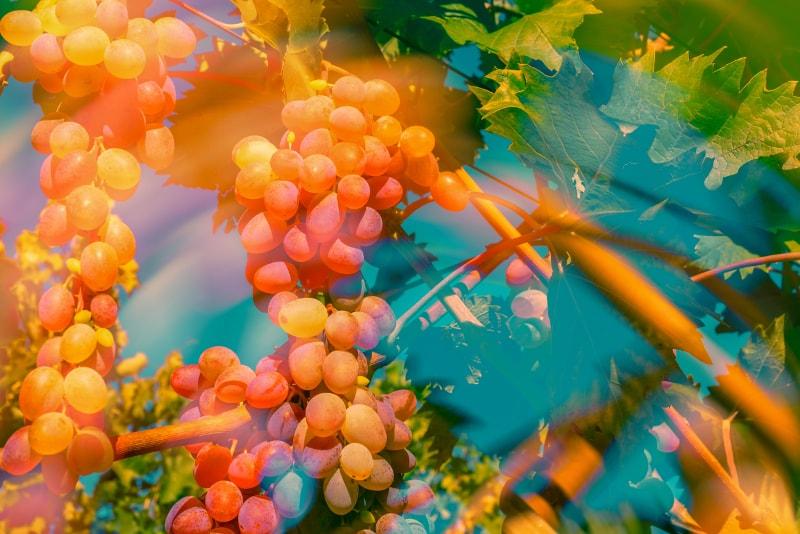Pienza - Excursões por vinícolas na Toscana