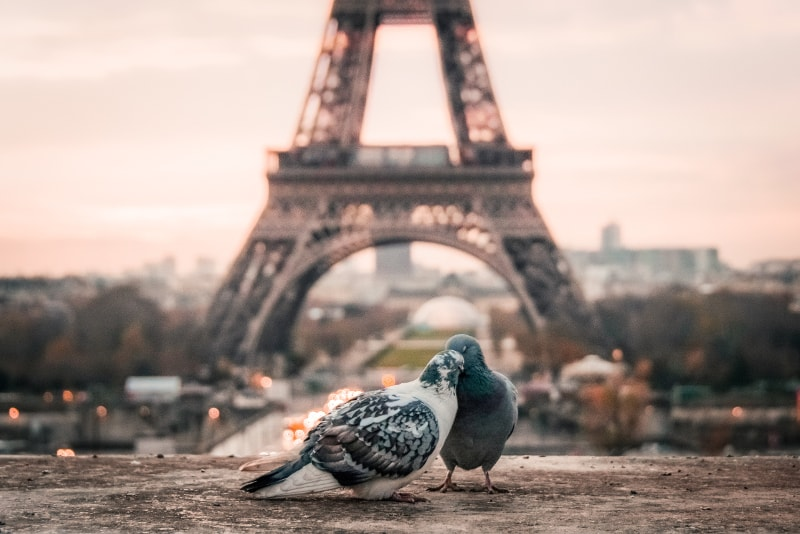 Eiffel tower how to book tickets