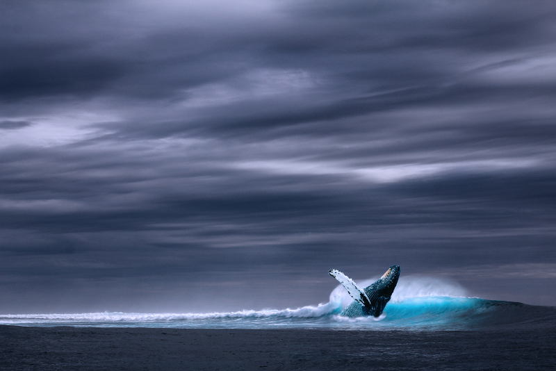 Baleia - Excursões na Islândia