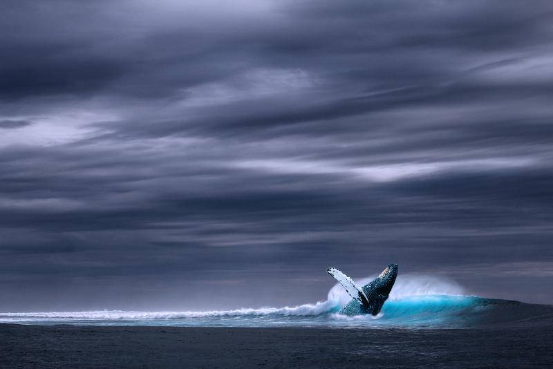 baleines - Excursions Pour Voir les Aurores Boréales en Islande