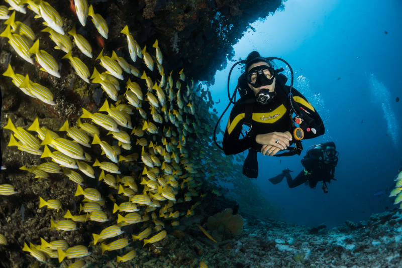 Diving - Things To Do In Phuket