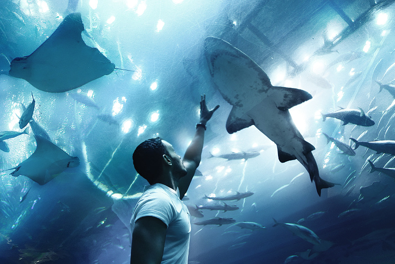 Acquario di Dubai e zoo sottomarino - scalo aeroporto Dubai