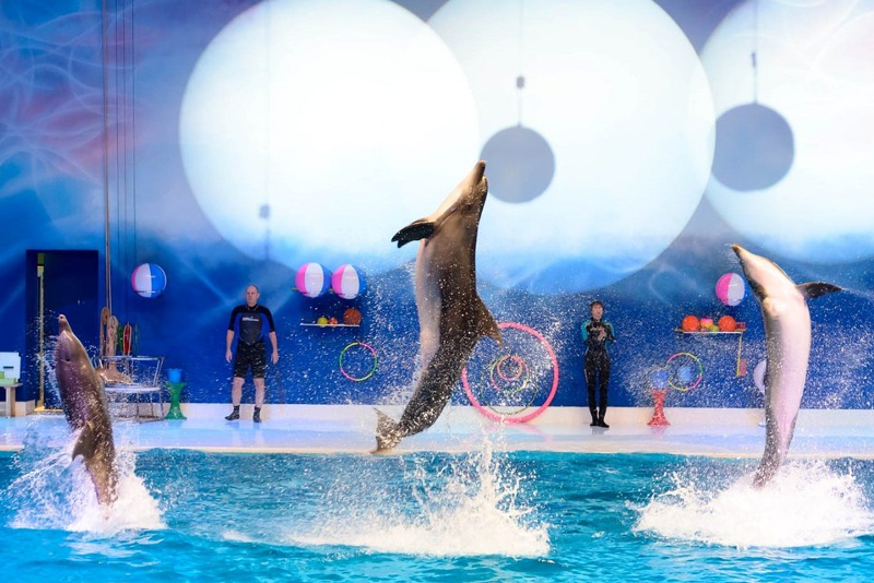 Dubai Dolphinarium - Parques Temáticos em Dubai