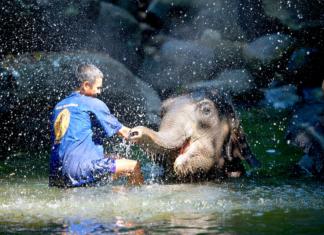 Elephant Jungle Sanctuary