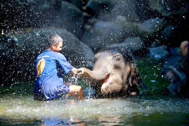 Elephant Jungle Sanctuary - Things To Do In Phuket