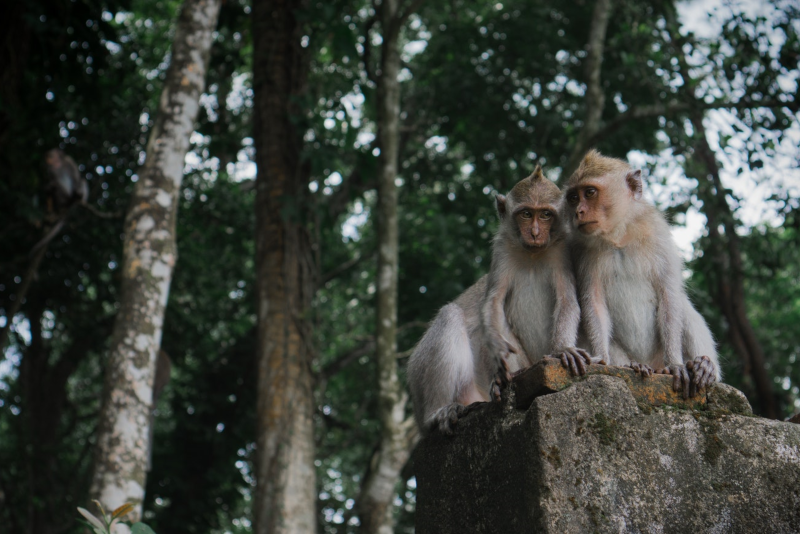 Monkey Hill - Things To Do In Phuket