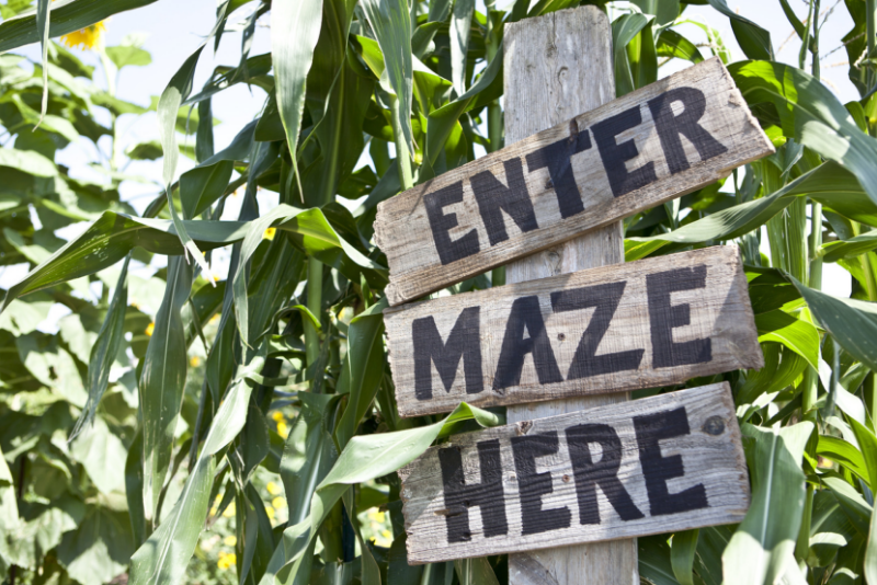 Amazing Maize Maze day trips from New York City