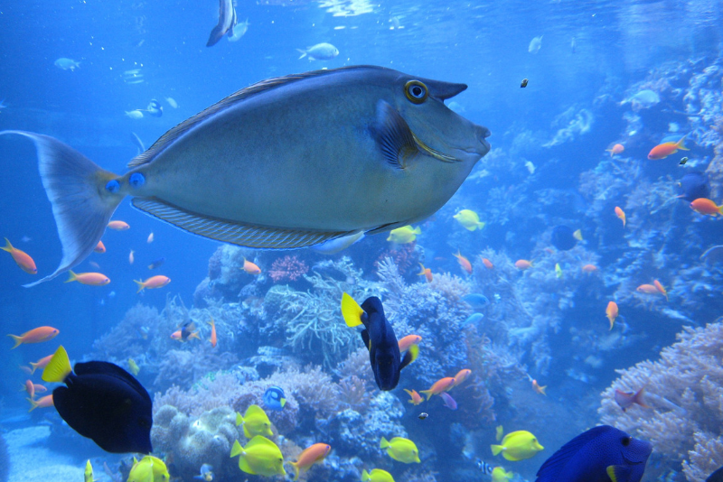 Long Island aquarium day trips from New York City