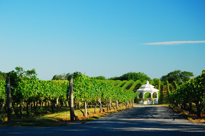 Long Island wineries day trips from New York City