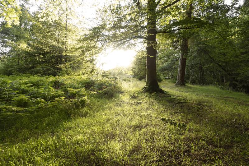 New Forest National Park - Day Trips From London