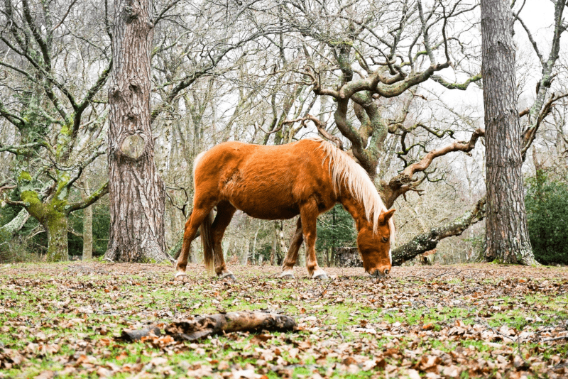 New Forest National Park - Escursioni da Londra
