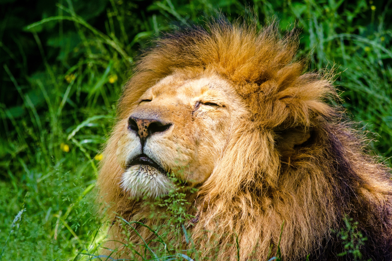 Whipsnade Zoo - Day Trips From London