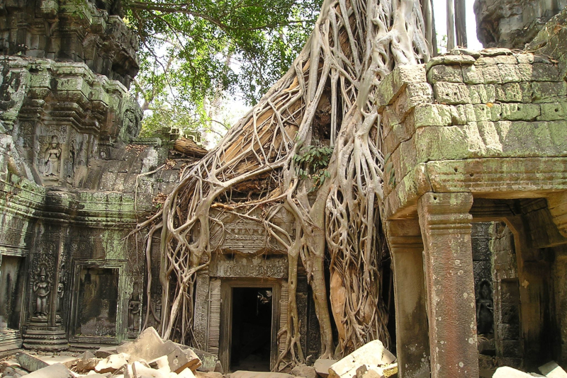 Angkor forest - Angkor temples tours