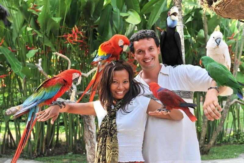 Bali Bird Park, Bali, Indonesia - #17 best places to visit in South Bali
