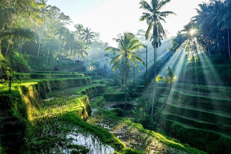 Jatiluwih Rice Terrace, Bali, Indonesia - #36 best places to visit in Central Bali