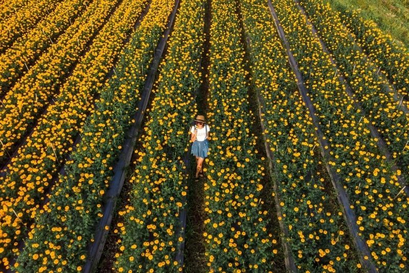Marigold Fields, Bali, Indonesia - #43 best places to visit in Central Bali