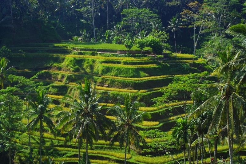 Tegallalang Rice Terrace, Bali, Indonesia - #30 best places to visit in Central Bali