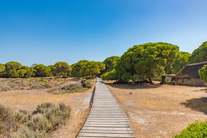 Doñana National Park - Seville day trip