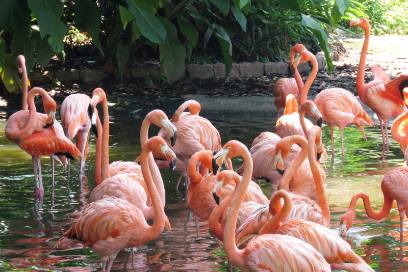 Aquatica San Diego # 23 parcs d'attractions en Californie