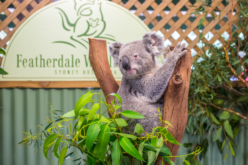 Featherdale Wildlife Park day trips from Sydney