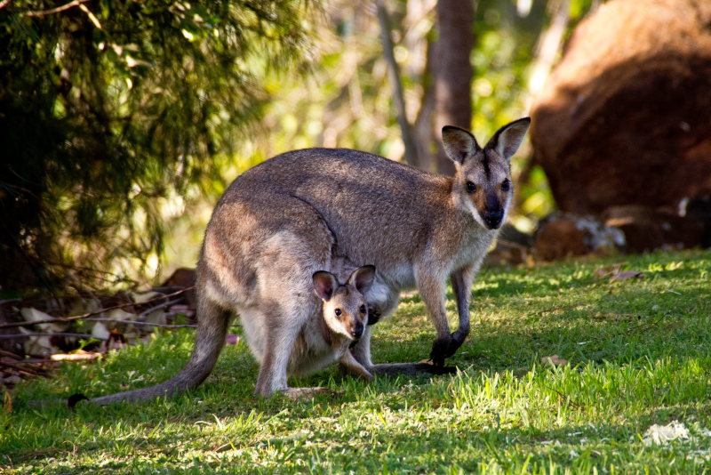 Healesville Sanctuary day trips from Melbourne