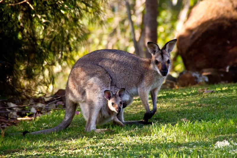 Tagesausflüge nach Healesville Sanctuary ab Melbourne