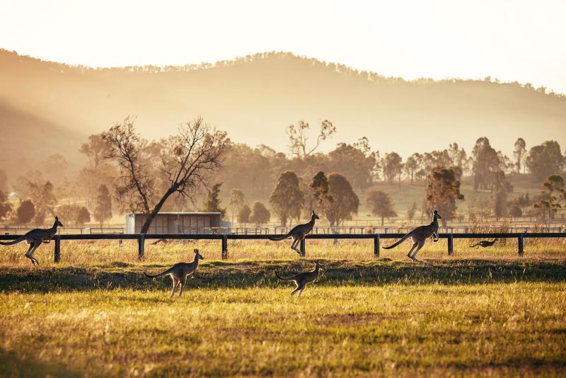 Excursiones de un día a Hunter Valley desde Sydney